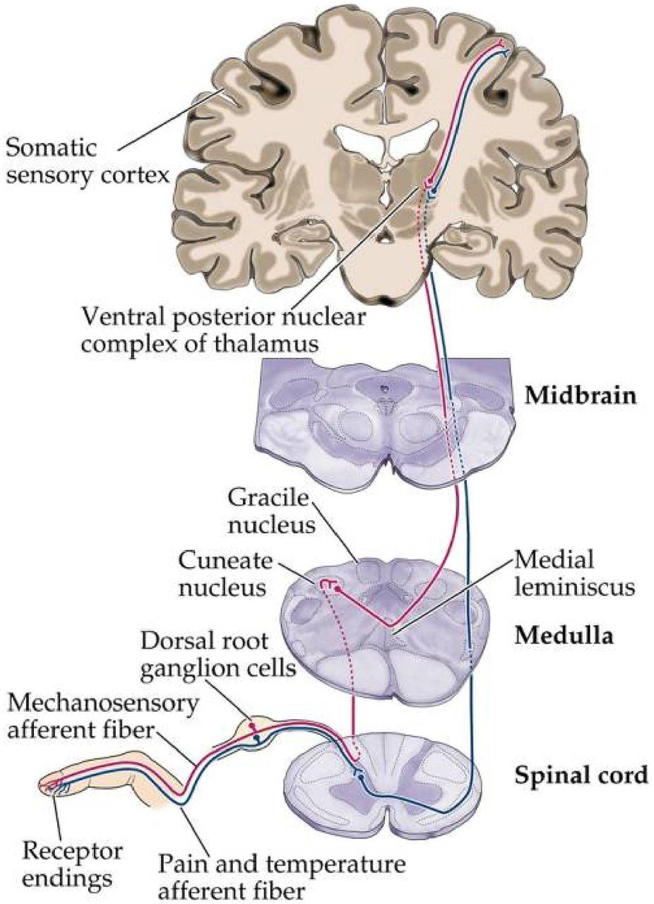 Pain As Metaphor  Metaphor And Medicine